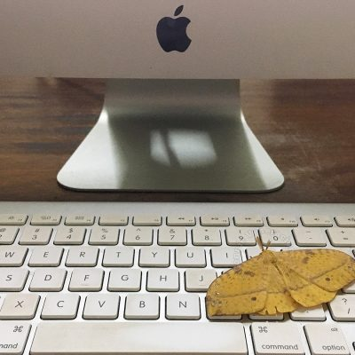 Yellow moth on iMac keyboard