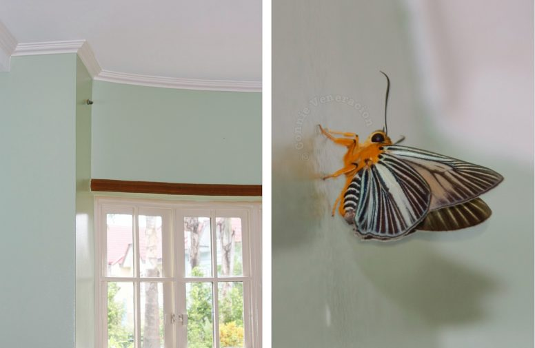 Colorful moth on bedroom wall