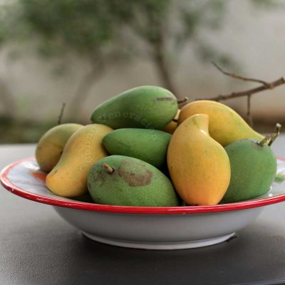A bowl of green and ripe mangoes